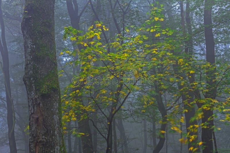 trä för höstlakereflexion royaltyfria bilder