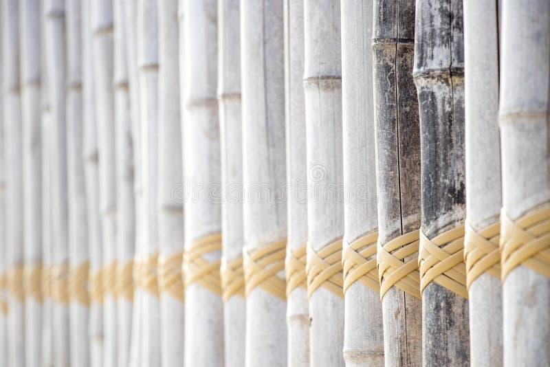 Trä för ljus färg och den gula öglan rope closeupbakgrund fotografering för bildbyråer