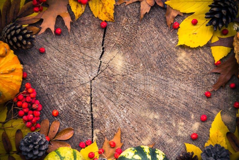 Trä för natur för höstbakgrundsgåvor royaltyfria bilder
