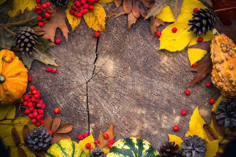Trä för natur för höstbakgrundsgåvor arkivbild