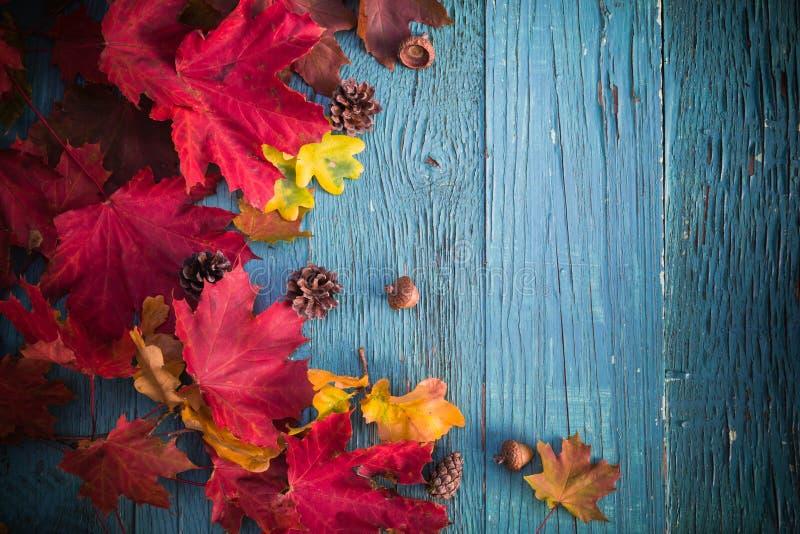 Trä för natur för sidor för höstbakgrundsgåvor royaltyfri foto