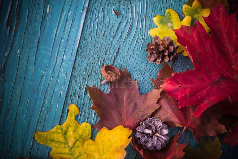 Trä för natur för sidor för höstbakgrundsgåvor arkivfoton