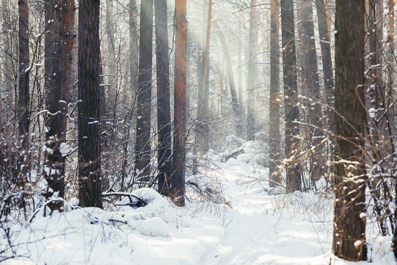 trä för vinter för plats för skoglake fridsamt Frostigt landskap, snöig träd royaltyfri foto