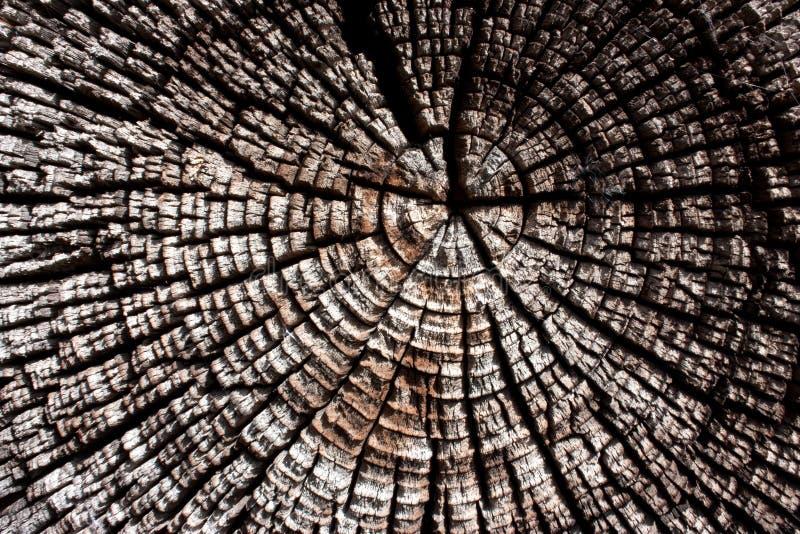 Trä i avsnitttextur, den forntida stubbenärbilden, tvärsnittet av trädet, klippte den gamla journalen, det bruna mörka gamla träd royaltyfri bild