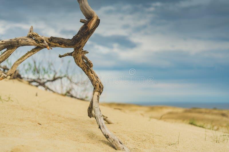 Trä i dyn arkivbild