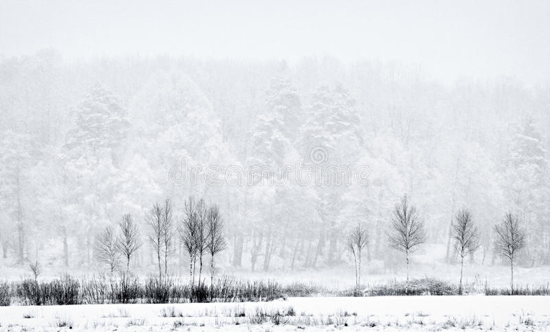 Trä i snö-kastby royaltyfri bild