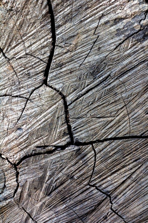 Trä knäckt bruten textur för snitt royaltyfri bild