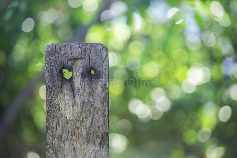 Trä med liknande hål och modeller en fågel bakgrunden är oskarpa sidor och Bokeh arkivbild