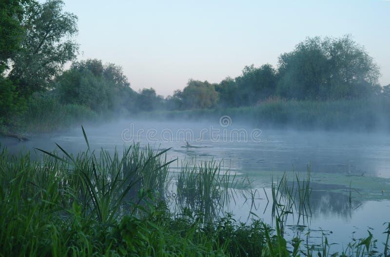 Trä på kusten av floden, morgon royaltyfri fotografi