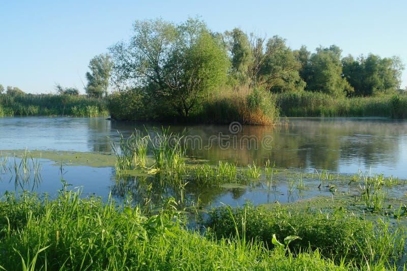 Trä på kusten av floden, morgon arkivfoto
