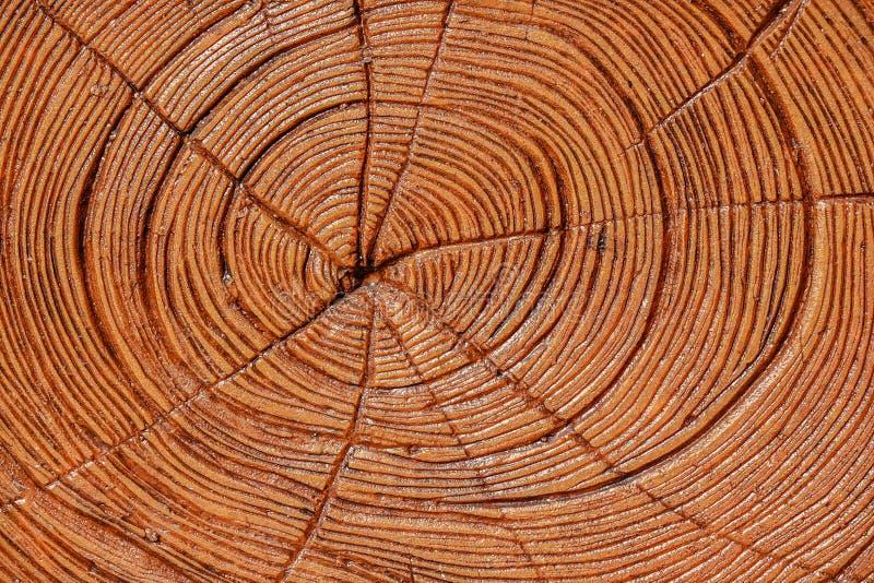 Trä ringer samma bakgrund för stam för sågsnittträd, bakgrunden för text, grov textur arkivbilder