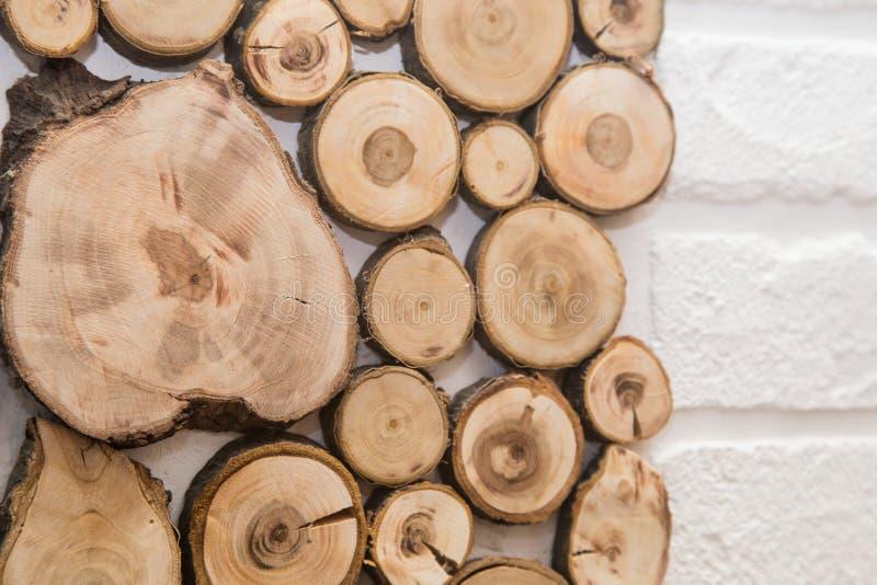 Trä såg det klippta trädet, med cirklar av liv royaltyfri bild