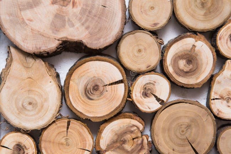 Trä såg det klippta trädet, med cirklar av liv arkivbild