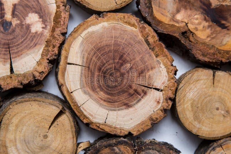 Trä såg det klippta trädet, med cirklar av liv royaltyfria bilder