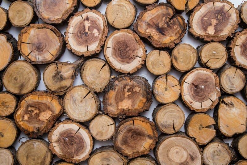 Trä såg det klippta trädet, med cirklar av liv arkivfoton