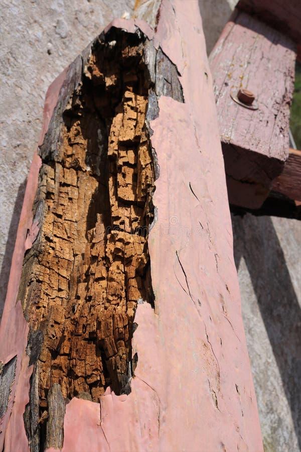 Trä som är ruttet i gammal byggnad arkivbilder