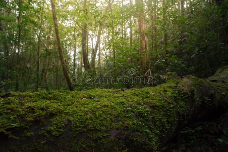 Trä som täckas med grön mossa i skogen royaltyfria foton