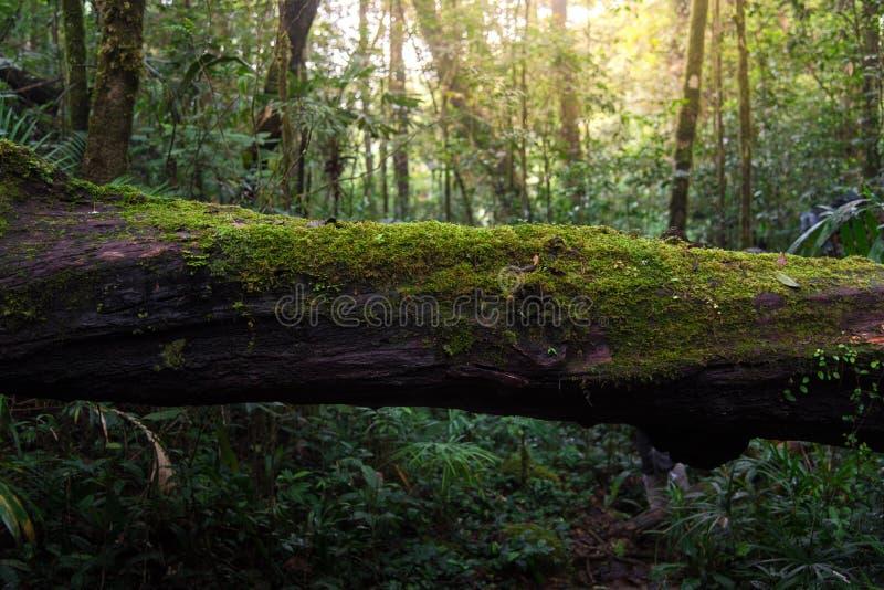 Trä som täckas med grön mossa i skogen royaltyfria bilder