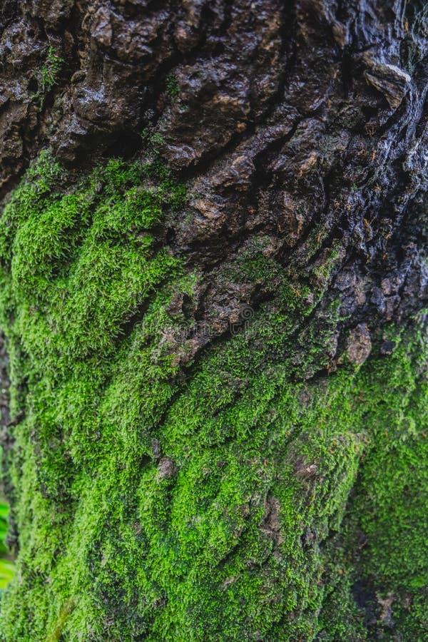 Trä som textureras med grön mossa royaltyfri foto