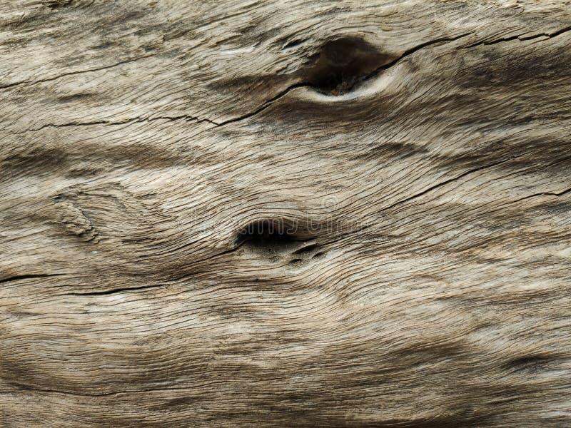 Trä som textureras med sprickan och hålet arkivbilder