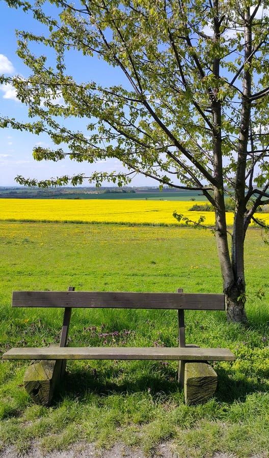 Trä töm bänken under ett träd på kanten av fältet royaltyfri fotografi