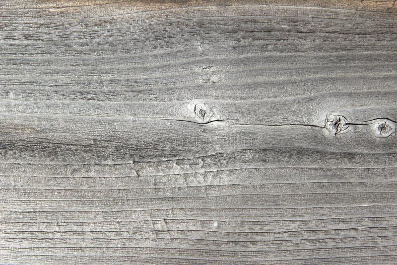 Trä Texture-3 royaltyfria bilder
