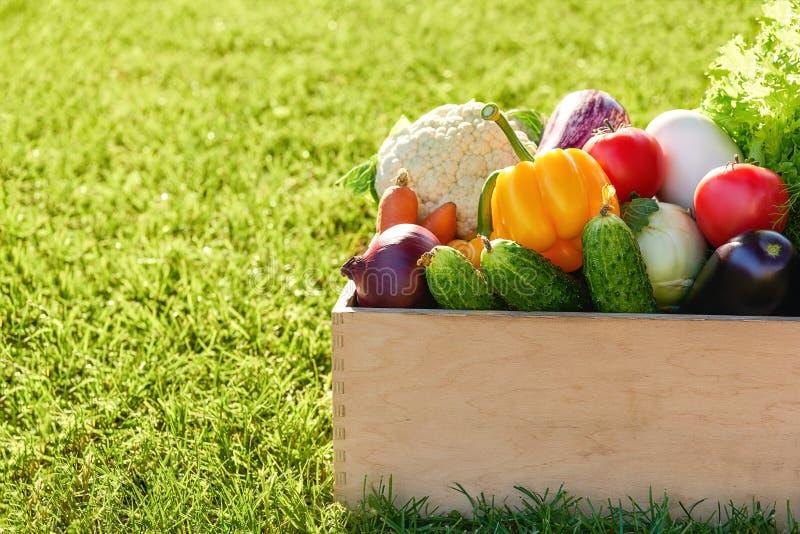 Träask eller spjällåda mycket av nytt skördade grönsaker in på en bakgrund för grönt gräs royaltyfri fotografi