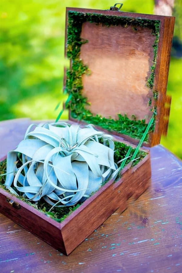 Träask med cirklar på ett bräde royaltyfria foton