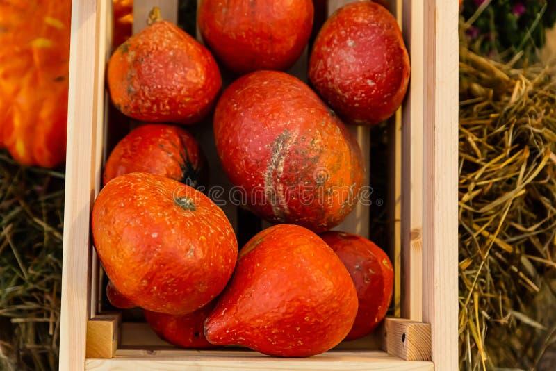 Träask som är full av för orange mini- den lantliga mång- bonden grönsakuppsättning för pumpor arkivbilder