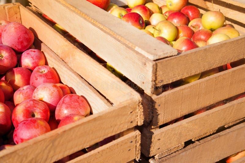 Träaskar med mogna röda äpplen arkivbild