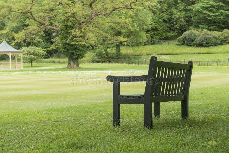 Träbänk under ett stort trädanseende på ett gräsfält i en stor trädgård för parkera royaltyfri bild