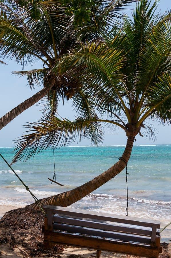 Träbänkgunga bredvid en palmträd framme av royaltyfri fotografi