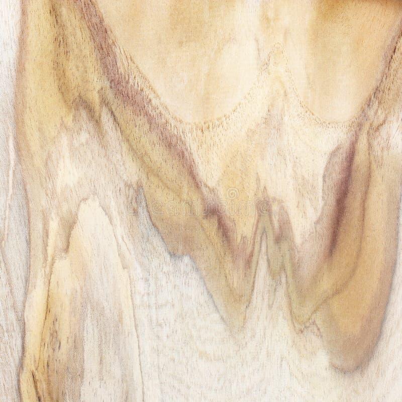 Träbakgrund eller textur; Naturlig wood modellbakgrund royaltyfria foton