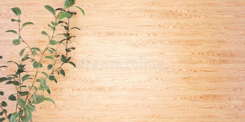 Träbakgrund med en illustration för växt 3D royaltyfria foton