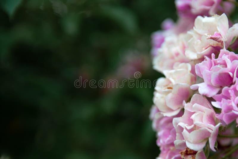 Träbakgrund med växt av släktet Trifolium arkivfoton