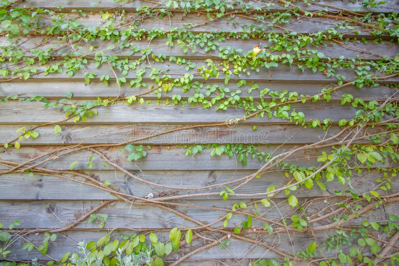 Träbakgrund och texturklättrare royaltyfria foton