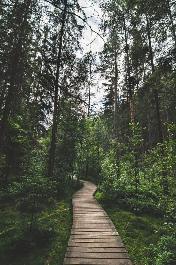 Träbana djupt i skogen i Tjeckien royaltyfri foto