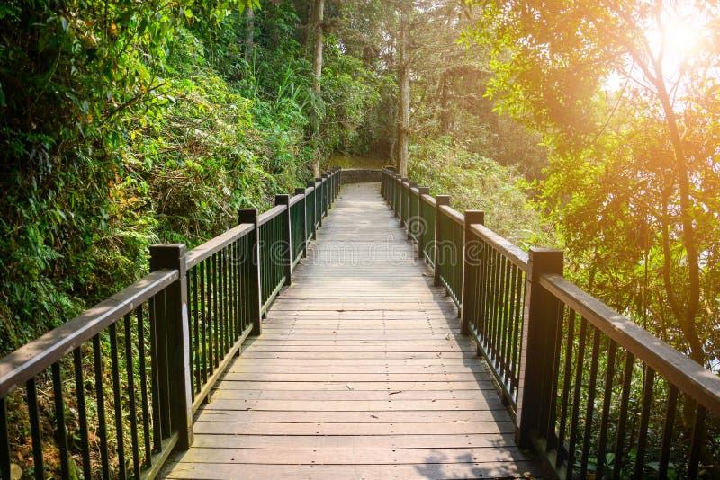Träbana eller träbro mellan trädet i tropiska skogar med solnedgång, koncept för framgång, solmånsjö royaltyfria bilder