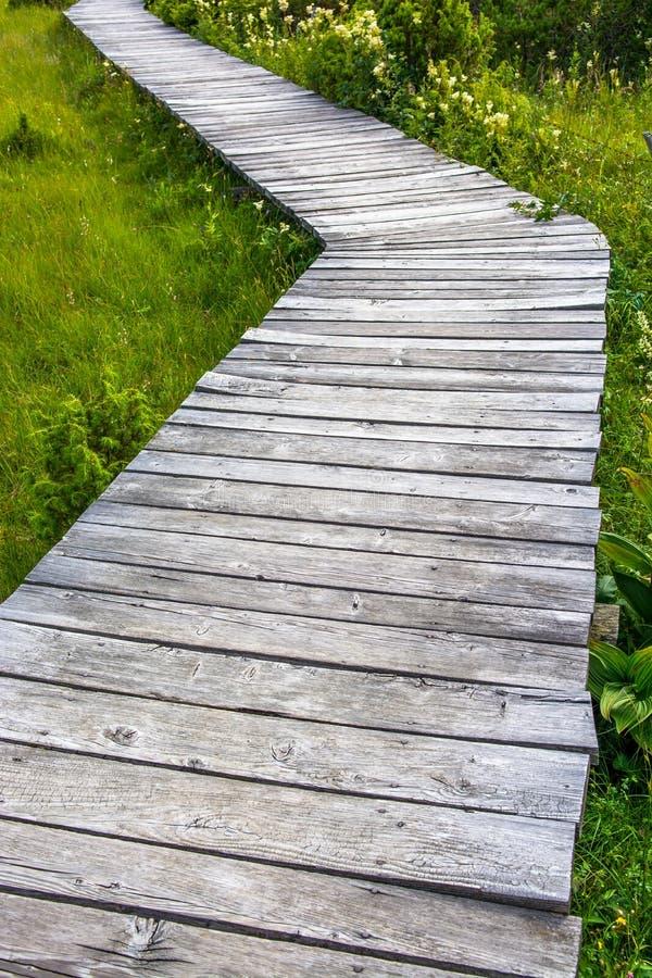 Träbana, till och med grön äng fotografering för bildbyråer