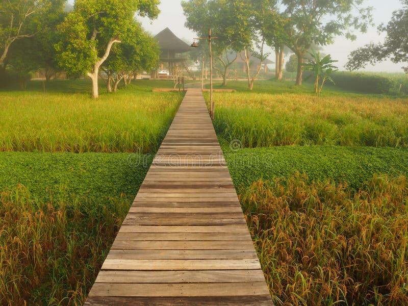 Träbanamittrisfält och mist arkivfoton