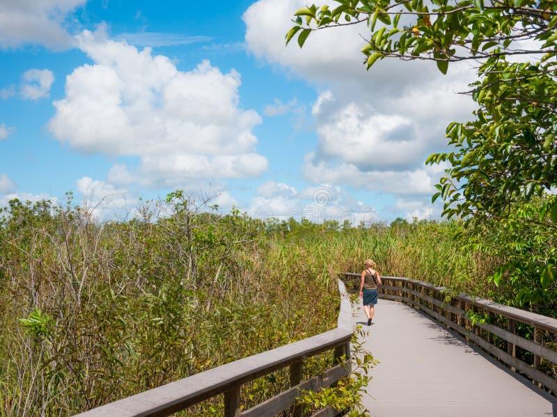 Träbanan på träsket i Everglades, Florida, USA arkivfoto