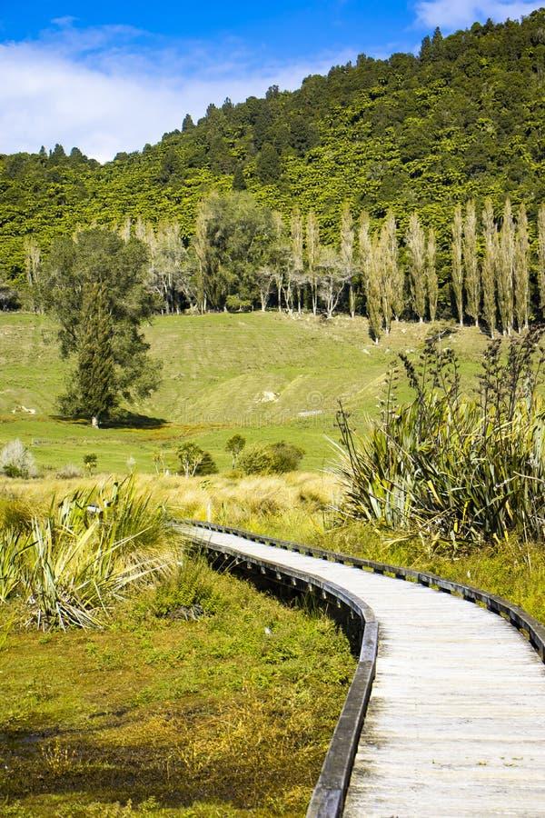 Träbanan till och med våtmarker översvämmar i natur på solig dag, med träd i avstånd royaltyfri bild