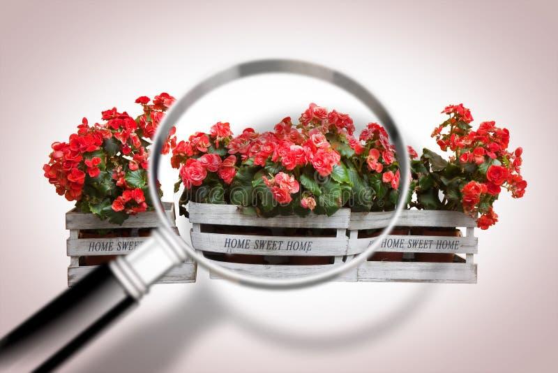 Träblommaaskar med förstoringsglaset på förgrund fotografering för bildbyråer