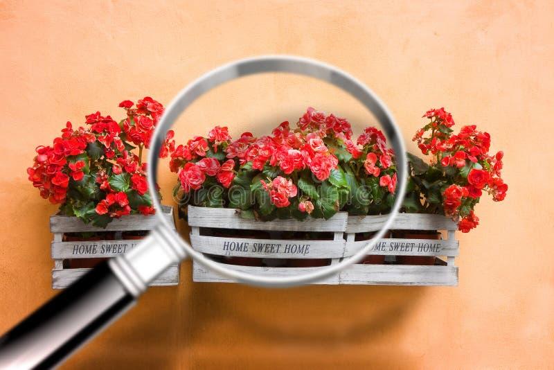 Träblommor boxas med förstoringsglaset på förgrund - resea royaltyfri foto