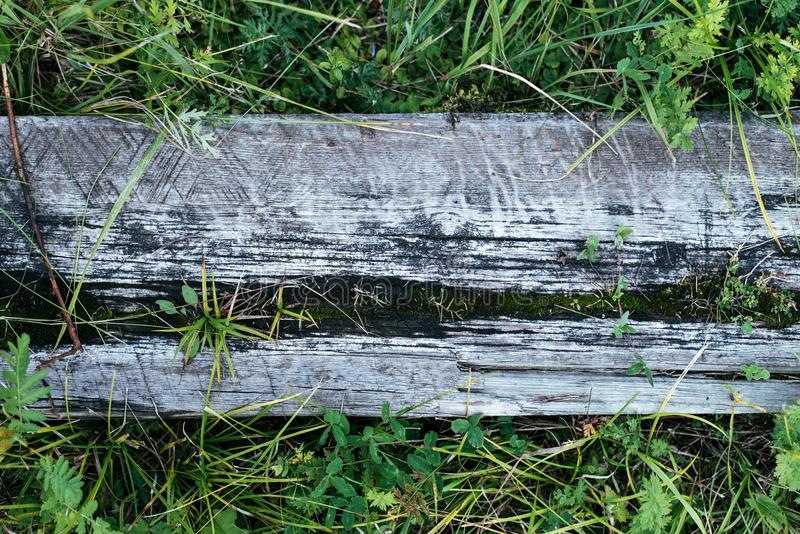 Träbräde av brett trä, bakgrund med grönt gräs Texturträd för att skriva text En sommardag i natur i fotografering för bildbyråer