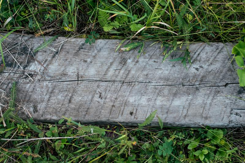 Träbräde av brett trä, bakgrund med grönt gräs Texturträd för att skriva text En sommardag i natur parkerar in royaltyfri fotografi