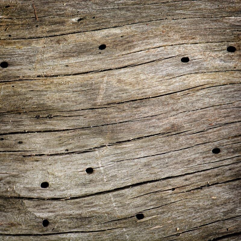 Träbräde med hål. royaltyfri foto