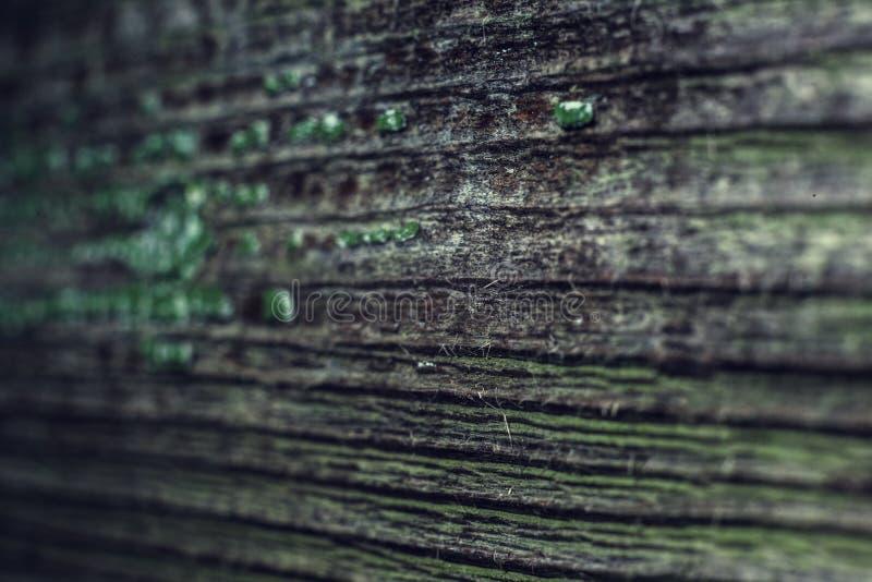 Träbräden med restna av grön målarfärg royaltyfri fotografi