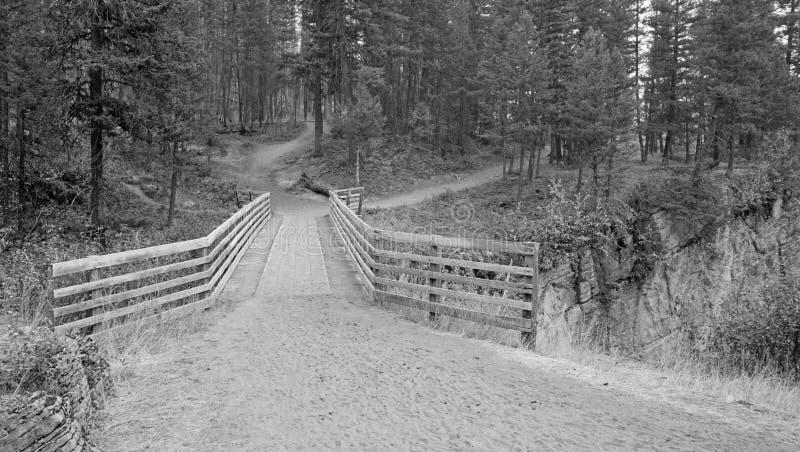 Träbro över ängliten vikklyftan för att fotvandra och hästryggemballageslinga i det Bob Marshall Wilderness komplexet Montana royaltyfri bild