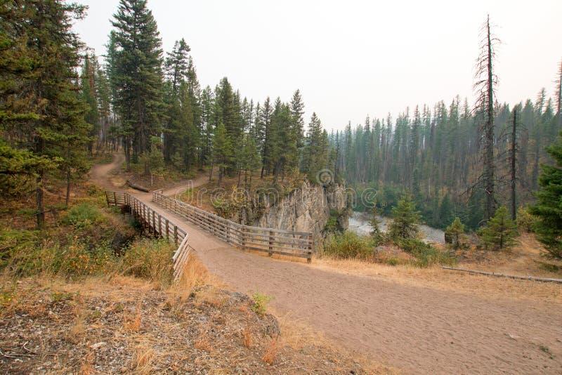 Träbro över ängliten vikklyftan för att fotvandra och hästryggemballageslinga i det Bob Marshall Wilderness området i Montana USA arkivbilder